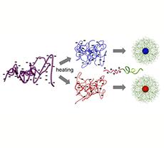 一本鎖DNAを封入した高分子ポリマーを使った遺伝子治療<br><br> 一本鎖DNAを搭載した球形のナノマシンが遺伝子治療の幅を拡大